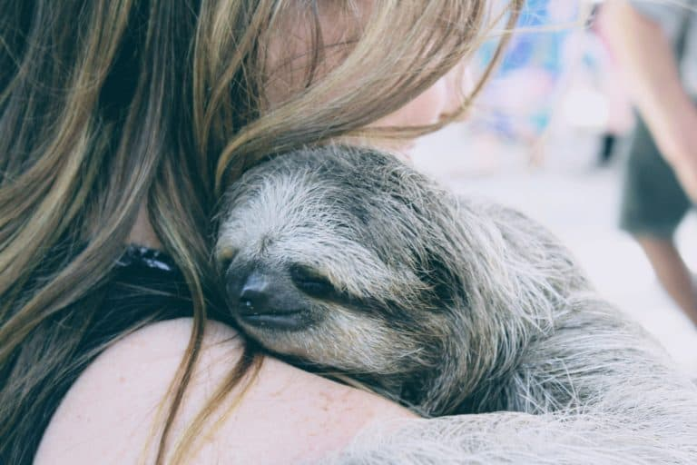 Sloths and monkeys in Roatan